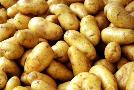 potatoes-445x300